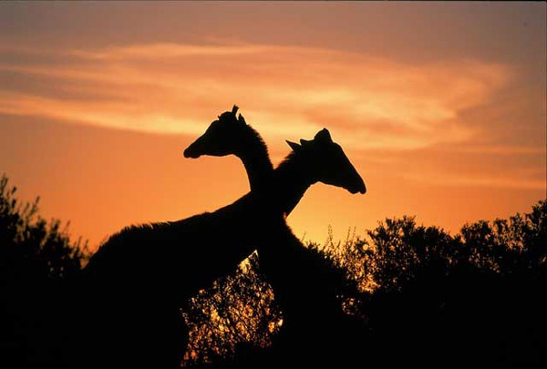 Sudafrica, meta top per italiani in luna di miele (Foto: South African Tourism) © Ansa
